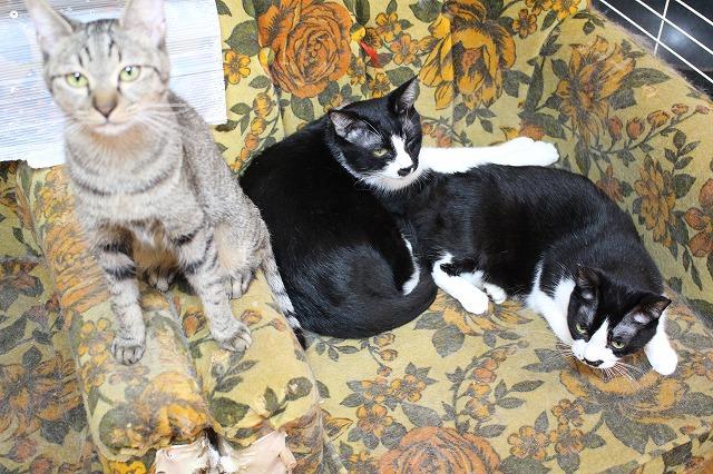 店舗案内 猫ちゃんふれあいルームのご利用について