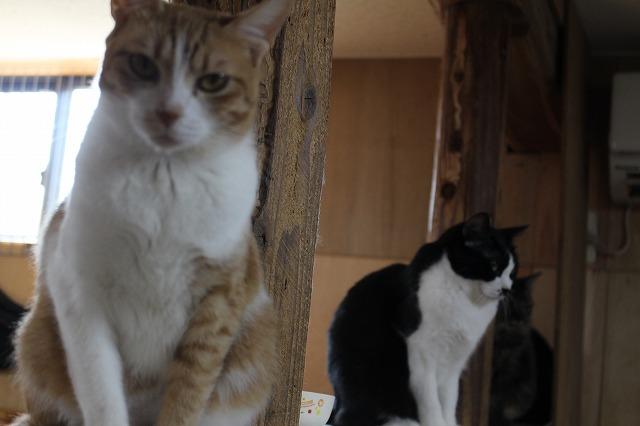 猫ちゃんs紹介ページ 猫ちゃんギャラリー1
