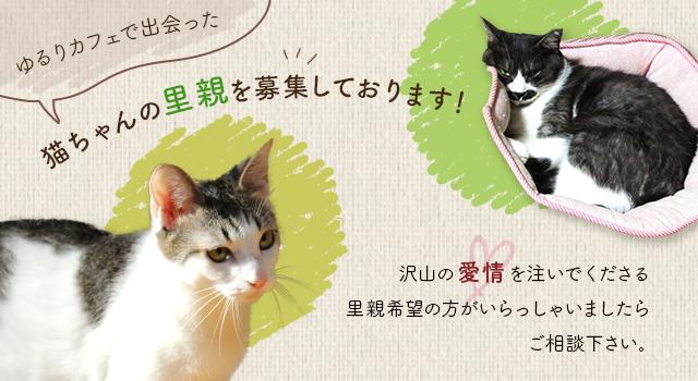 猫ちゃん紹介バナー